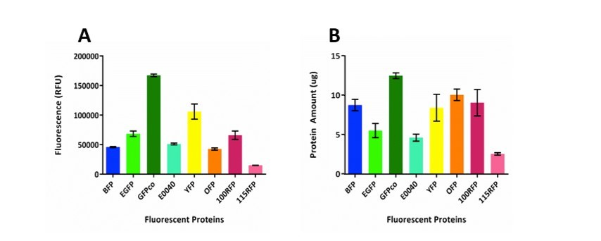 Figure 4: (A) Graph of relative fluorescence calculated for 1mL of culture using TECAN M1000 set for a gain of 80 and bandwidth of 5nm (RFP10nm). Error bards represent standard deviation from triplicate cultures. (B) Graph shows amount of fluorescent protein (ug) present in 1mL of culture for each of the fluorescent proteins. The ratio amount of purified protein/10000 RFU of fluorescence of purified protein (Appendix Figure C) was used to determine total amount of fluorescent protein in 1mL of culture.