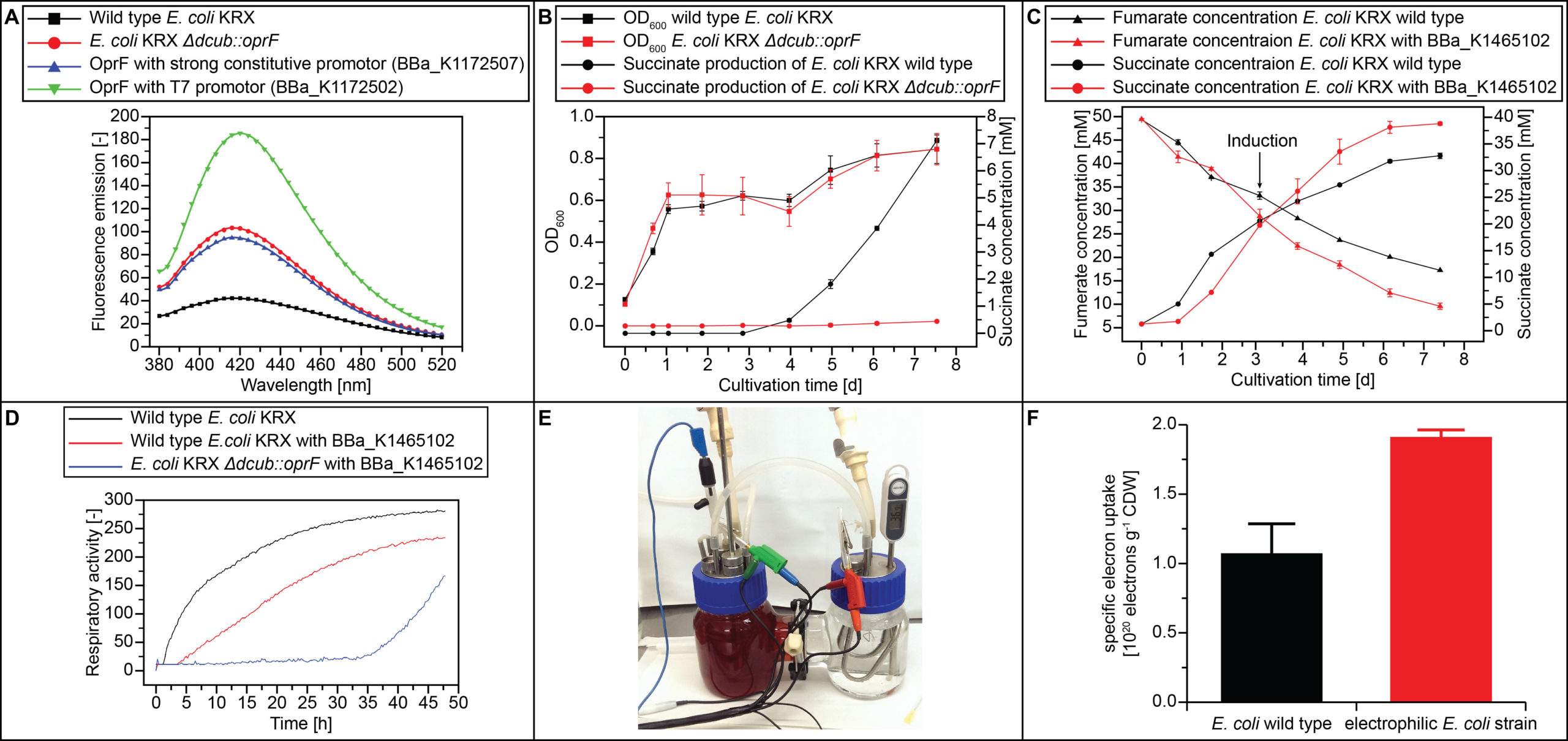Characterization of an electrophilic E. coli strain in H-cell reactor. (A)The results of the NPN-Uptake-Assay showed an increased membrane permeability for the oprF expressing strains compared to the E. coli wild type. (B) The anaerobic cultivation in M9 minimal medium with 50 mM glucose showed a significant decrease of succinate export in case of E. coli ΔdcuB::oprF compared to E. coli wild type. (C) The anaerobic cultivation in M9 minimal medium with 50 mM xylose and 50 mM fumarate showed a higher succinate production and fumarate consumption in case of E. coli wild type with overexpressed frd (BBa_1465102) compared to E. coli wild type. (D) Results of the Biolog® experiment showed a lower respiratory activity for E.coli with BBa_1465102 and E. coli ΔdcuB::oprF with BBa_1465102 in comparison to E. coli wild type (E) Picture of a self-made H-cell reactor for electricity supported bacterial growth. (F) The constructed strain E. coli ΔdcuB::oprF with overexpressed fumarate reductase (BBa_K1465102) showed a higher electron uptake during cultivation in the electro biochemical reactor compared to the E. coli wild type.
