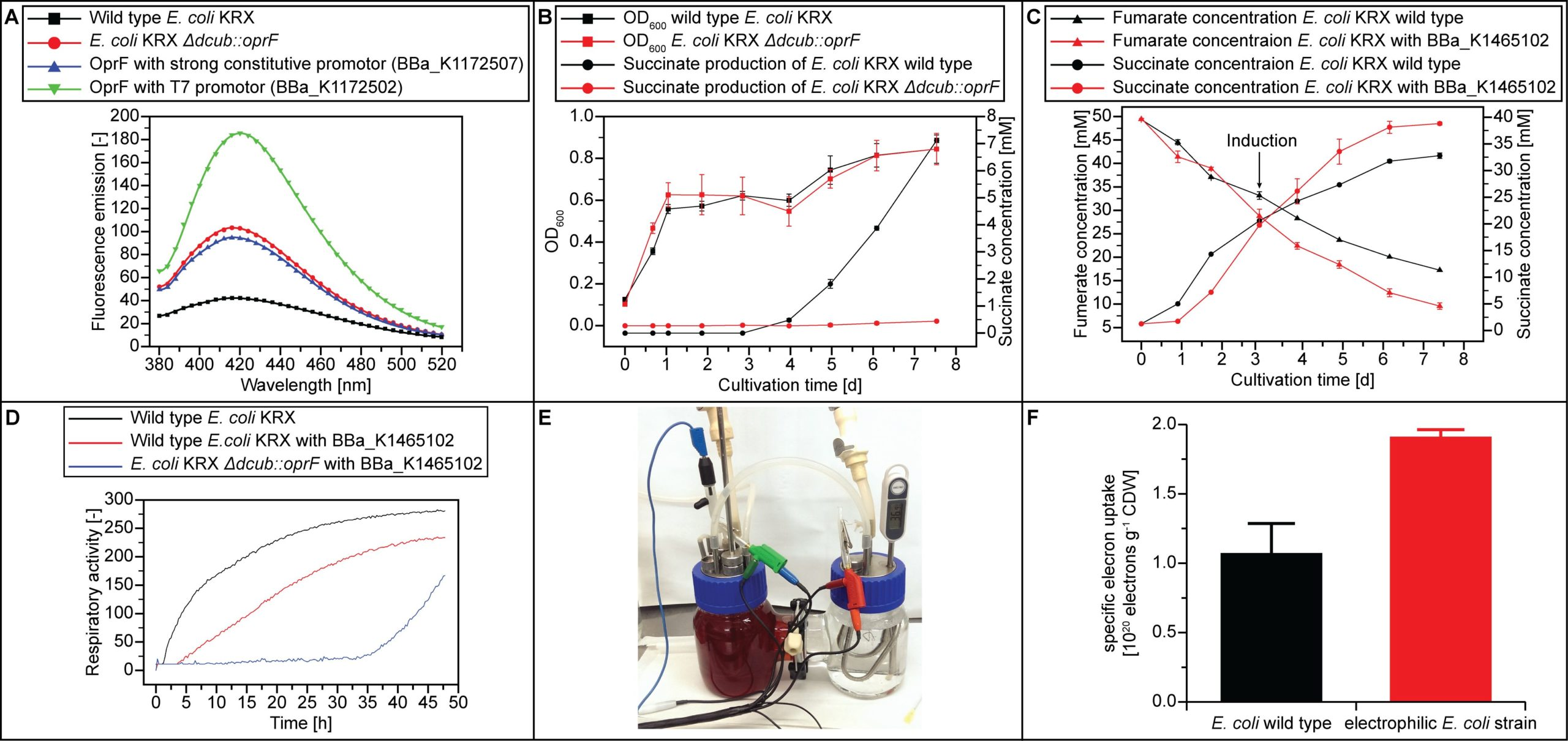 Characterization of an electrophilic E. coli strain in H-cell reactor.