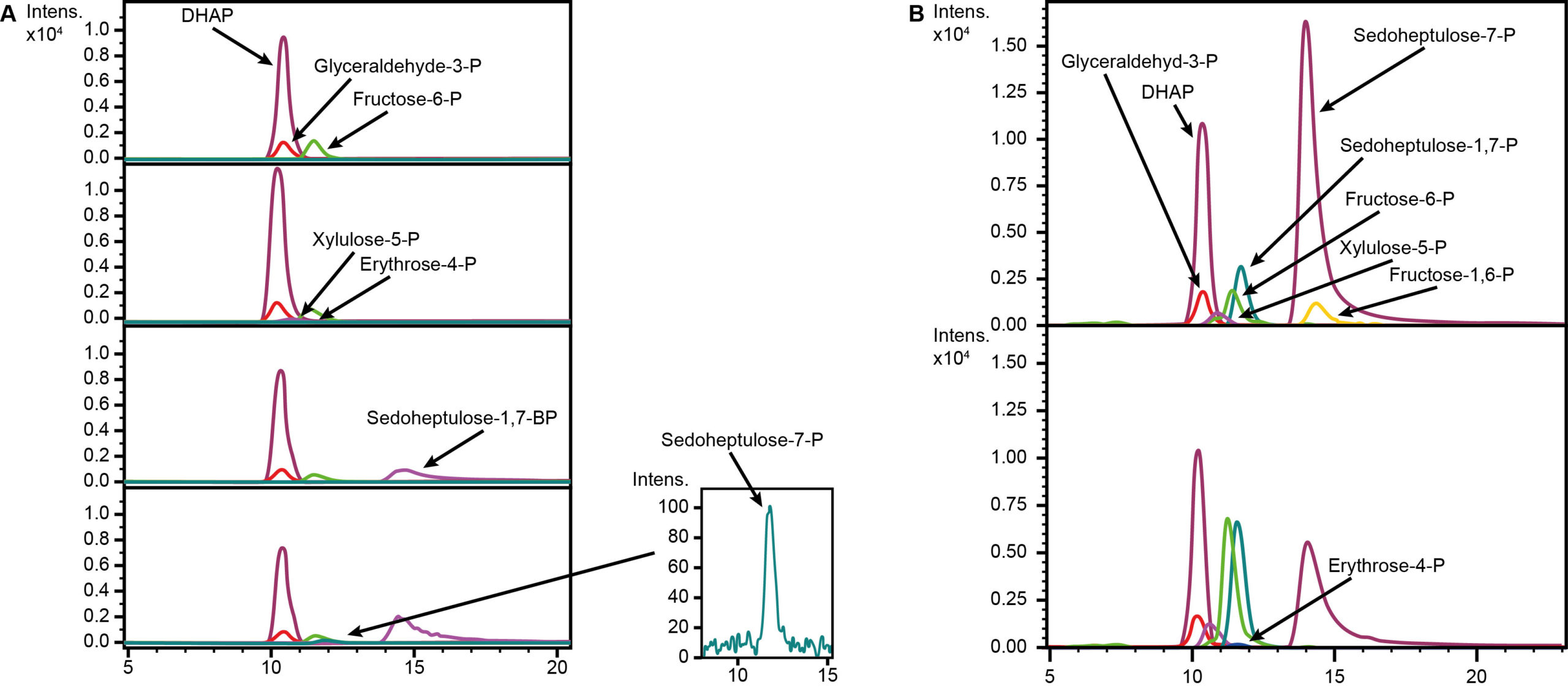 SBPase activity in enzyme assay. (A) Tkt and Fba were added successively to allow the formation of the substrate SBP. Finally, the SBPase was added to produce S7-P via dephosphorylation of SBP. (B) Reactions with all enzymes carried out at 37°C (top) and 50°C (bottom) showed the functionality at cultivation temperatures of E. coli.