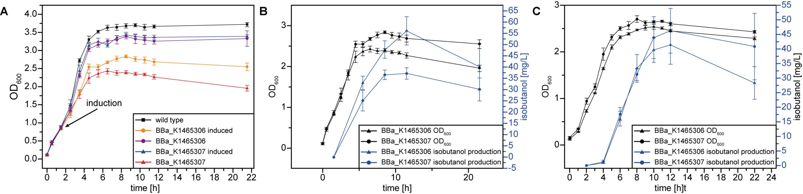 Fig. 5 Isobutanol production. (A) The growth of two engineered E. coli strains compared to the wild type and (B and C) the isobutanol production of those engineered E. coli cultures are shown. The isobutanol production based on either BBa_K1465306 or BBa_K1465307 demonstrated the functionality of both constructs at (B) 37°C and (C) 30°C, respectively.