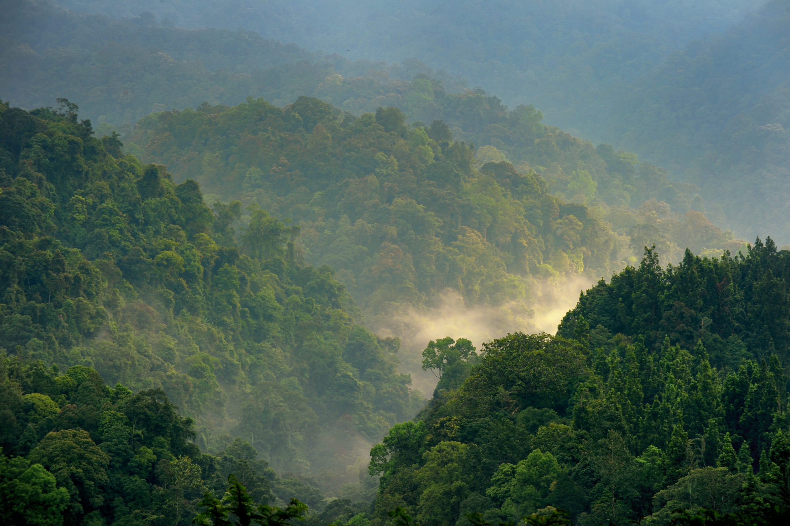 Forest scenery of Gede Pangrango in the morning.