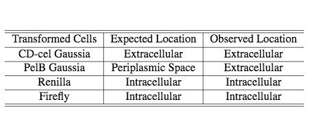 Table 2: This table shows the luciferases that were produced in bacteria and their subcellular locations.